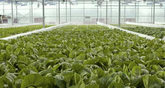 Wxow News 19 Weather >> What do cows, fish & a greenhouse have in common? - Greenhouse Vegetable News